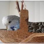 Kokosschaukel als Vogelspielzeug