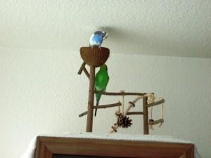Wellensittich Spielzeug mit Vögeln