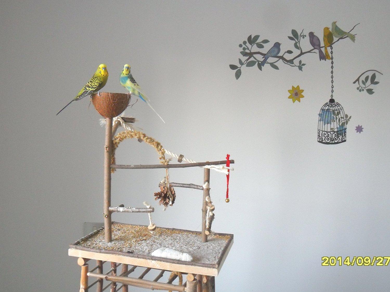 wellensittich vogelspielplatz mit v geln vogelkaefig. Black Bedroom Furniture Sets. Home Design Ideas