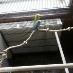 Vogelspielzeug mit Sisal Kletterseil und 3 Naturholz Sitzstangen