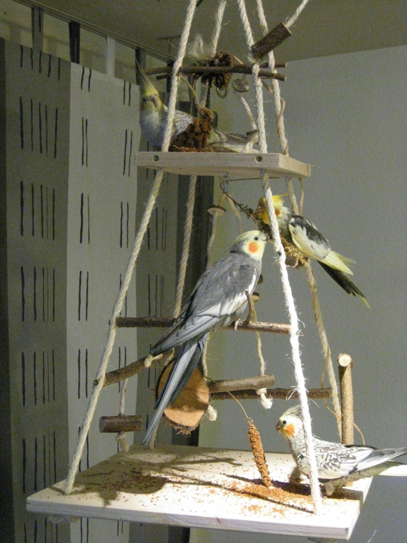 vogel freisitz selber bauen material