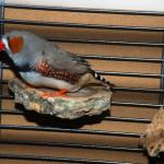 Kork-Sitzbrettchen (3 Stück) - Tolles Vogelspielzeug zum Knabbern