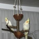 Kokos Vogelspielplatz mit Futternapf und Naturholz-Sitzstangen