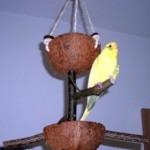 Wellensittich Spielzeug mit Futternapf und Naturholz-Sitzstangen