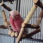 Kletterbrücke aus Naturholz - Tolles Vogelspielzeug