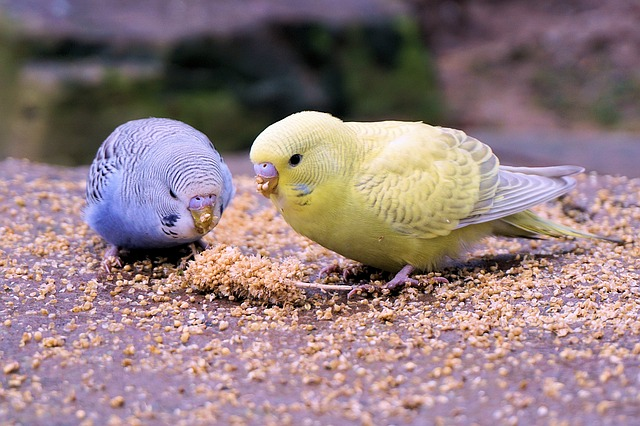 vögel vom dach fernhalten